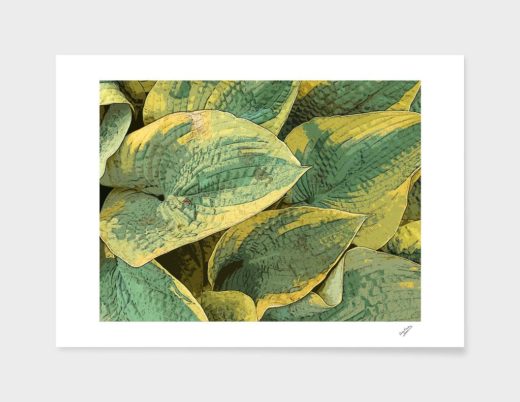Yellow Fringed Green Hosta Leaves Deekflo