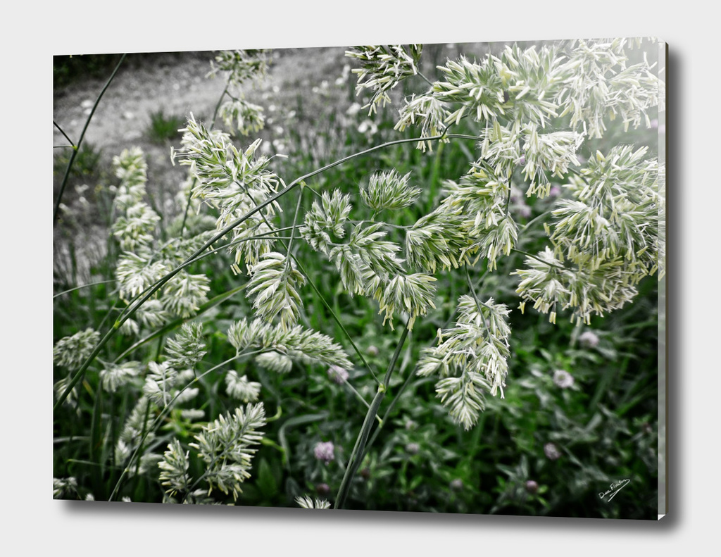 Winterized Grasses DeekFlo