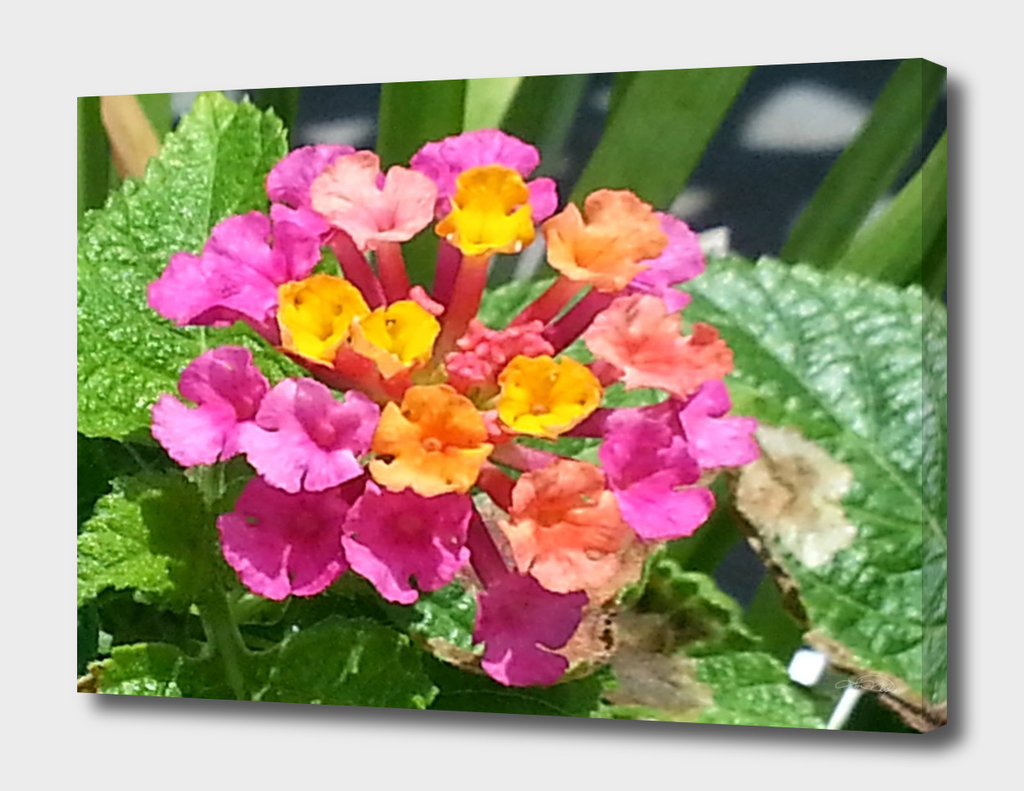 Little Pink and Yellow Flowers