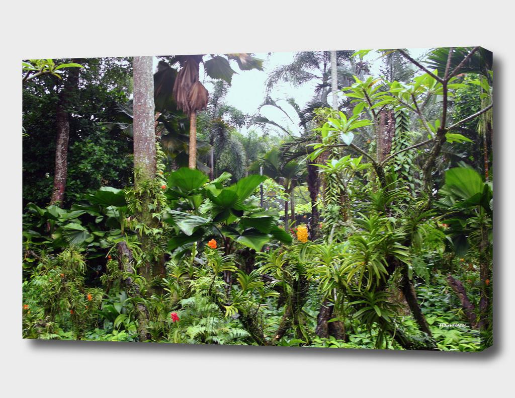 Singapore Botanical Garden 1