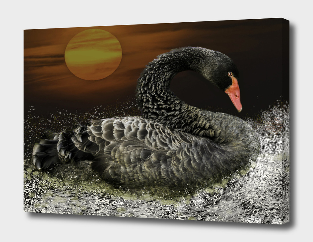 Black Swan by Moonlight