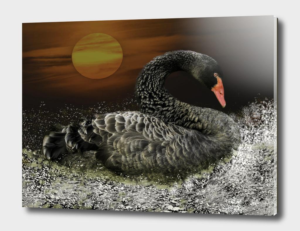 Black Swan by Moonlight