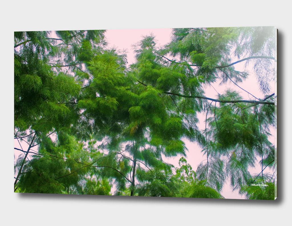 Singapore Botanical Garden 4