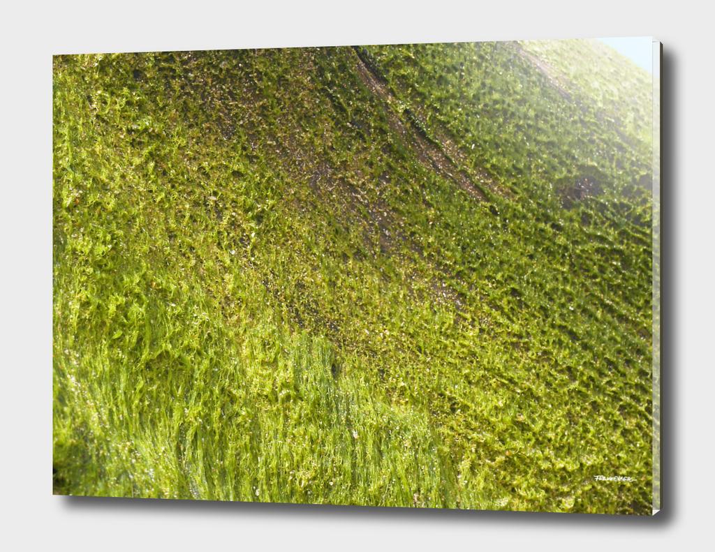 Seaweed #3 – Sri Lanka - west