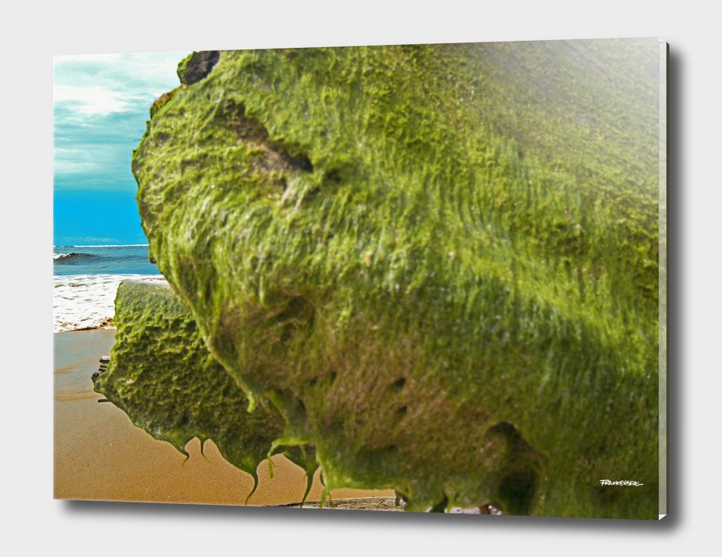 Seaweed #8 – Sri Lanka - east