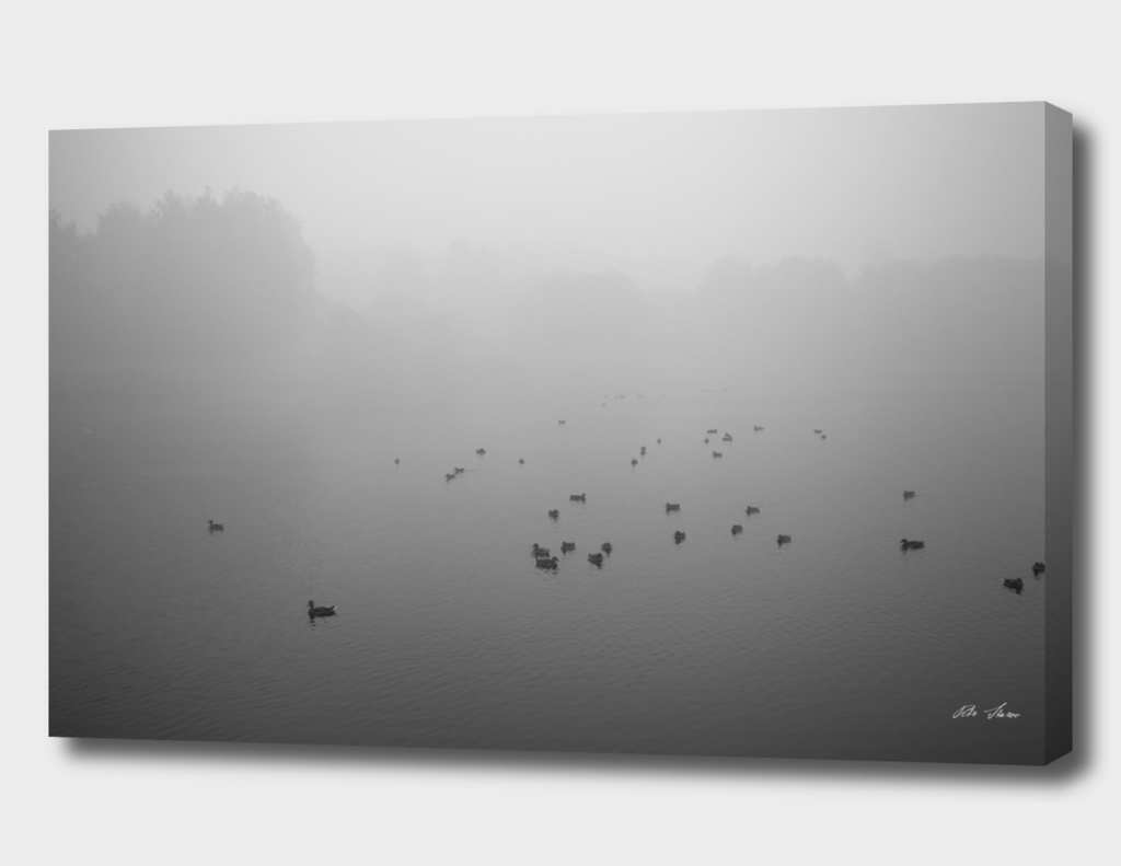 Birds in the smoke