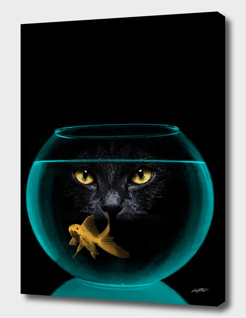 black cat goldfish II