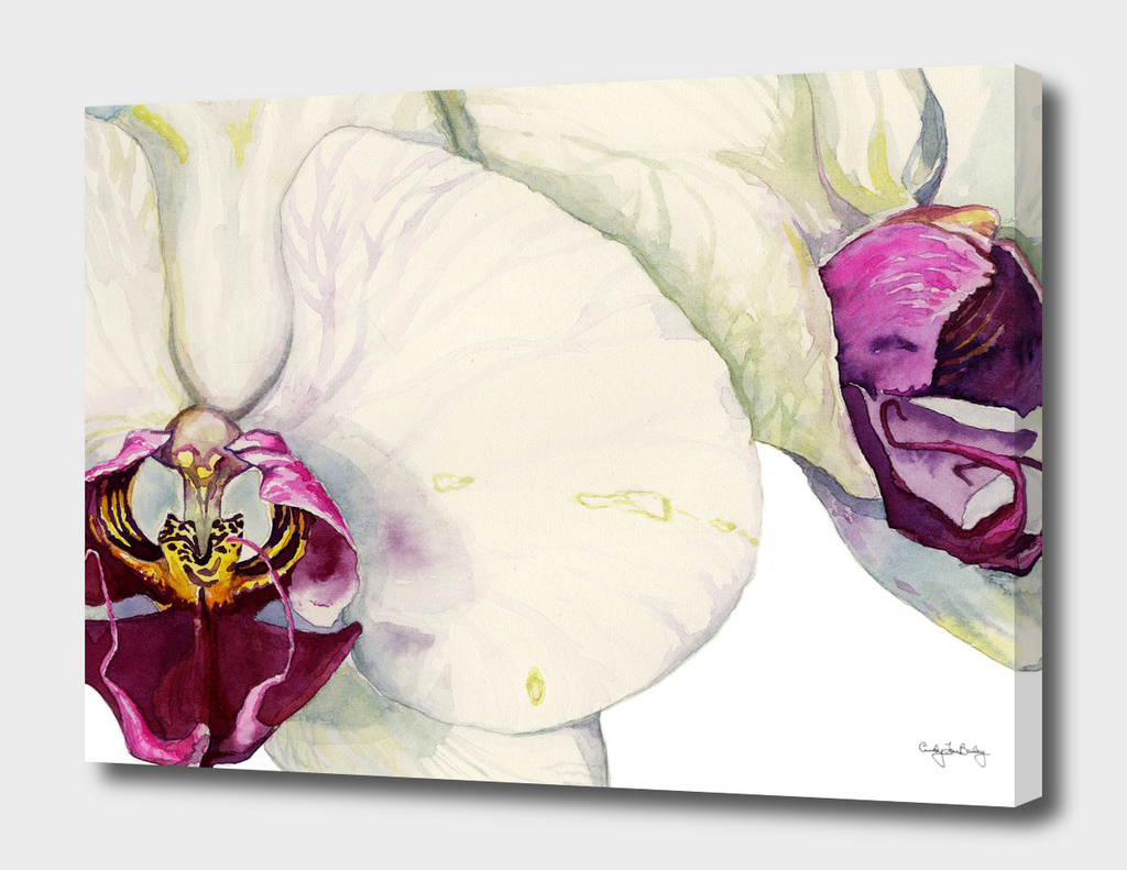 Cream & Fuchsia Phalaenopsis Orchids