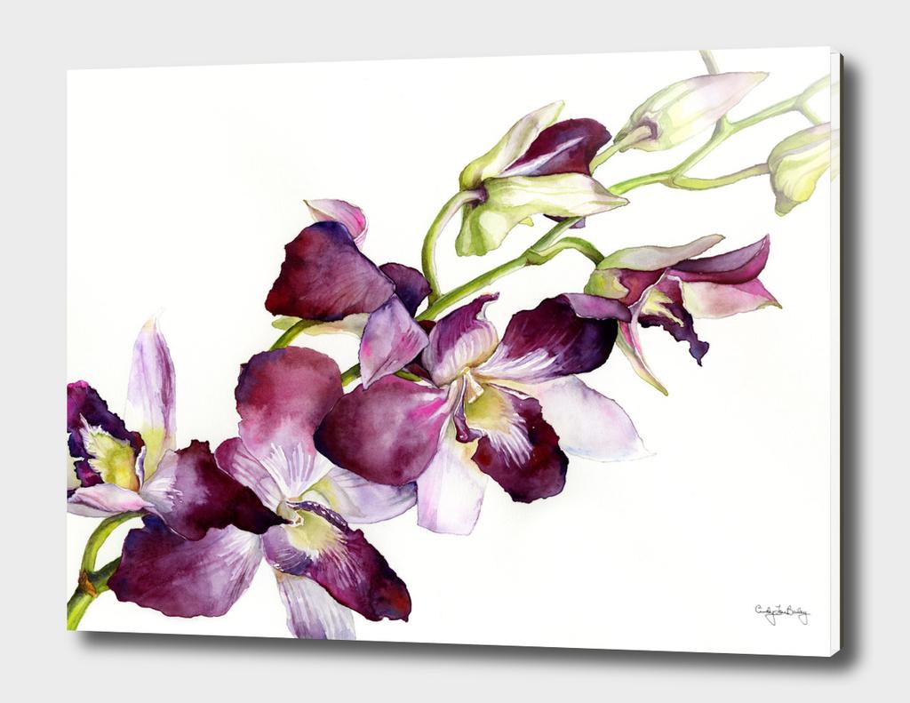 Radiant Orchids: Magenta Dendrobiums