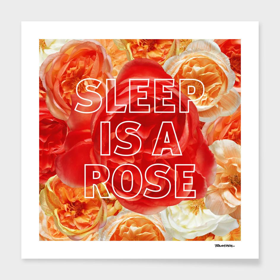 Sleep is a Rose