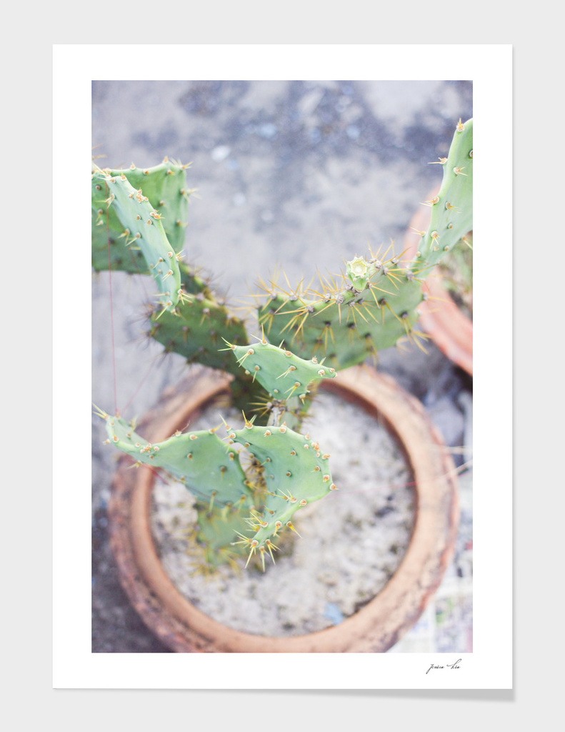 Cactus growing