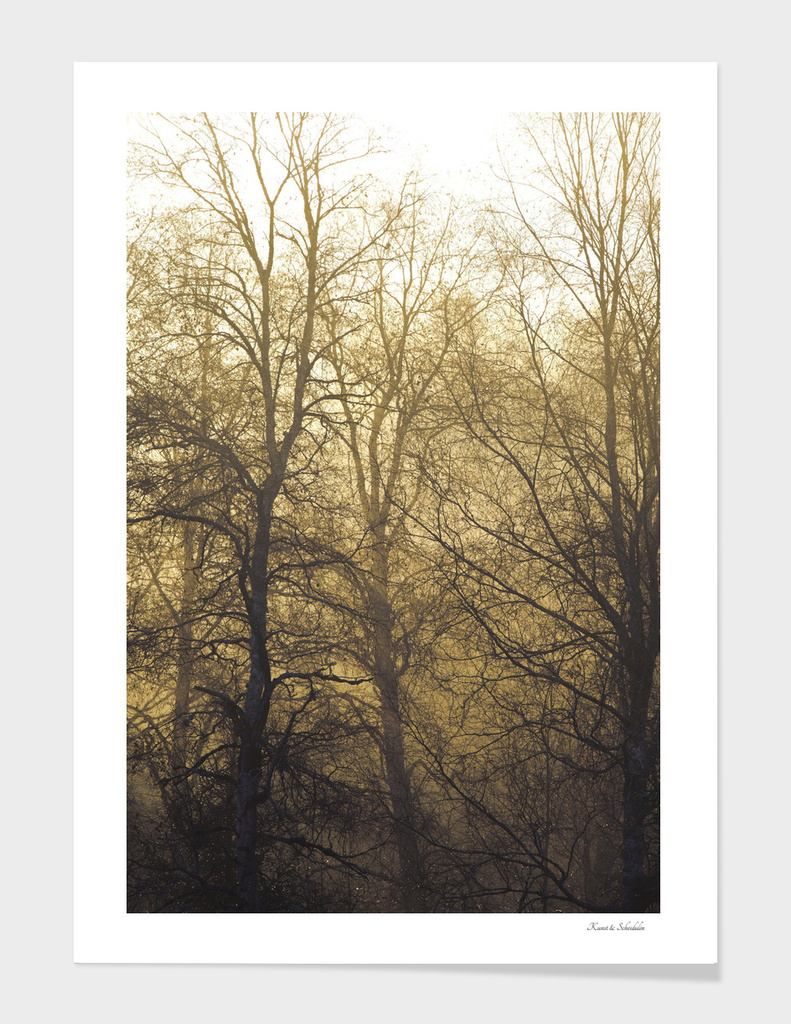 Bare trees on a hazy morning