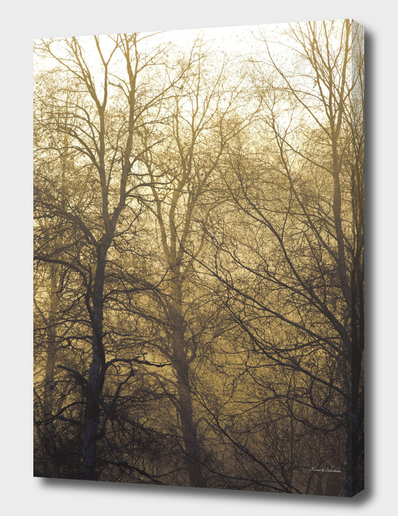 Bare trees on a hazy morning