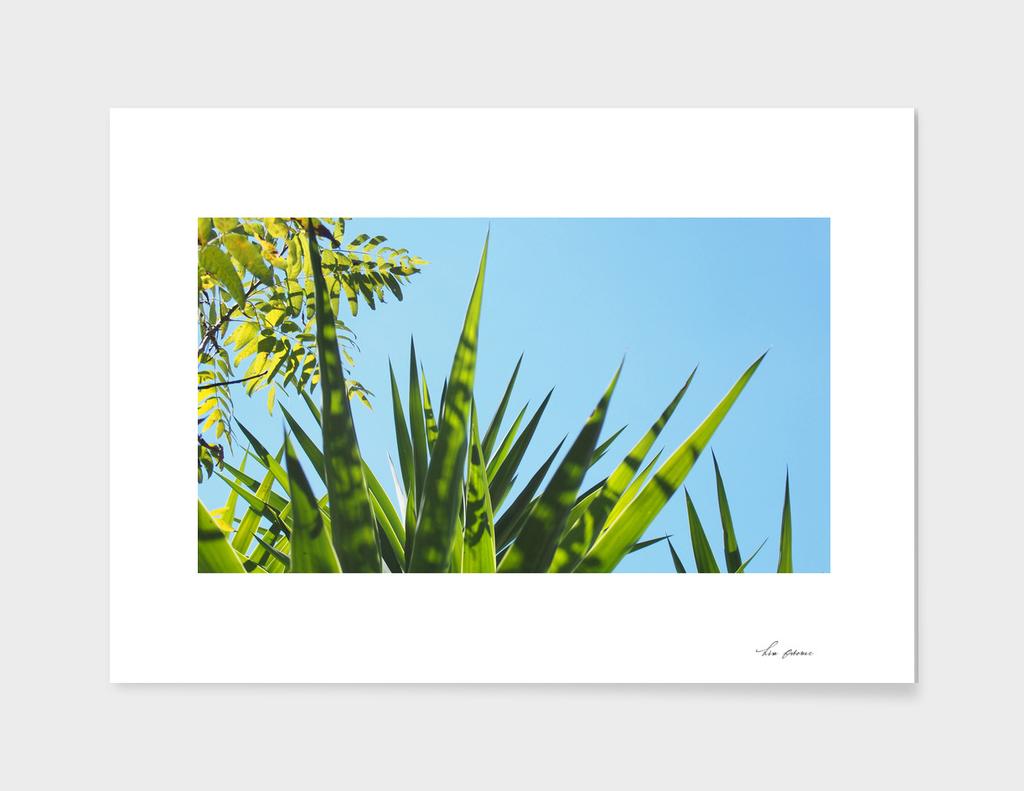Photo 70090 (4x3)