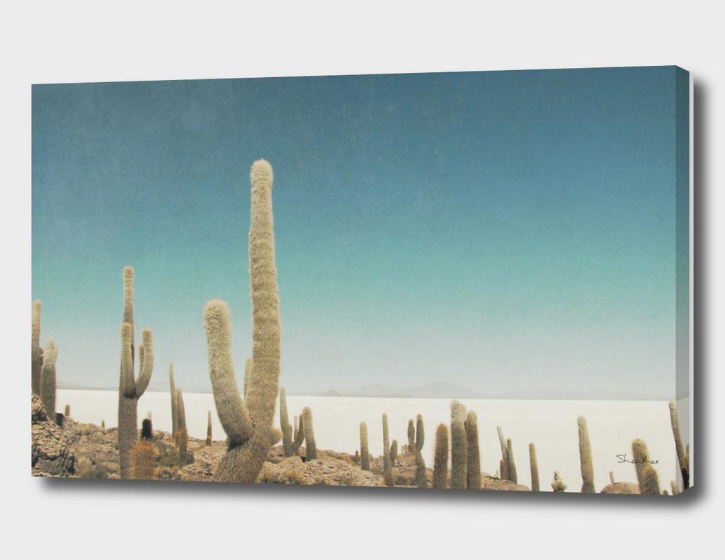 Cactus Salt