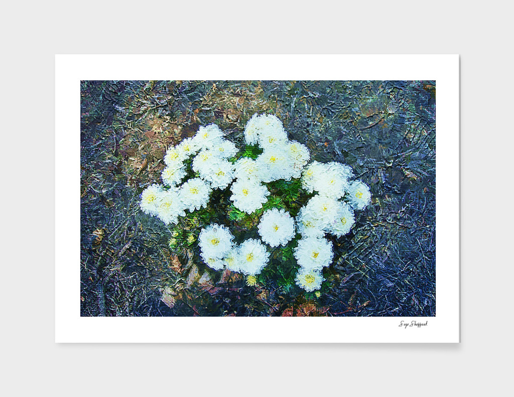 Flowers in Fall | Autumn Bloom