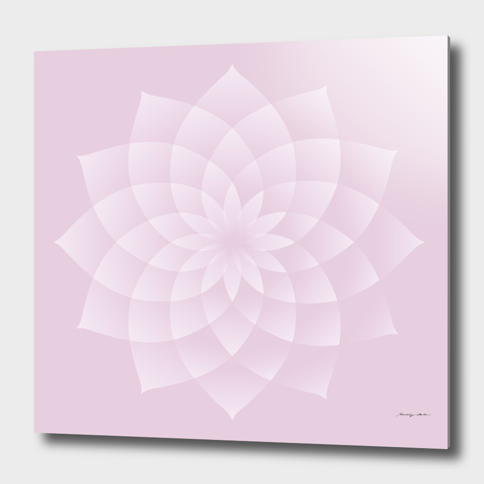 Thousand Petal Lotus in Pink