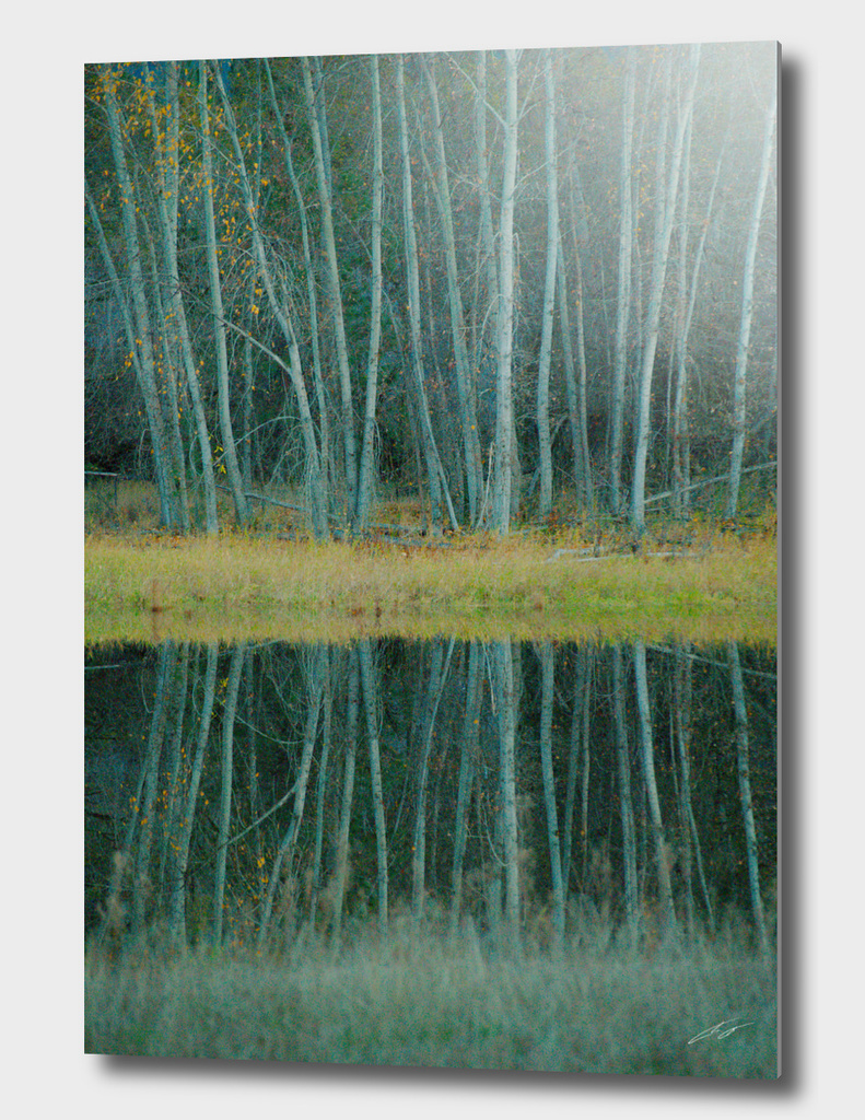 Trees of Calm Waters 2