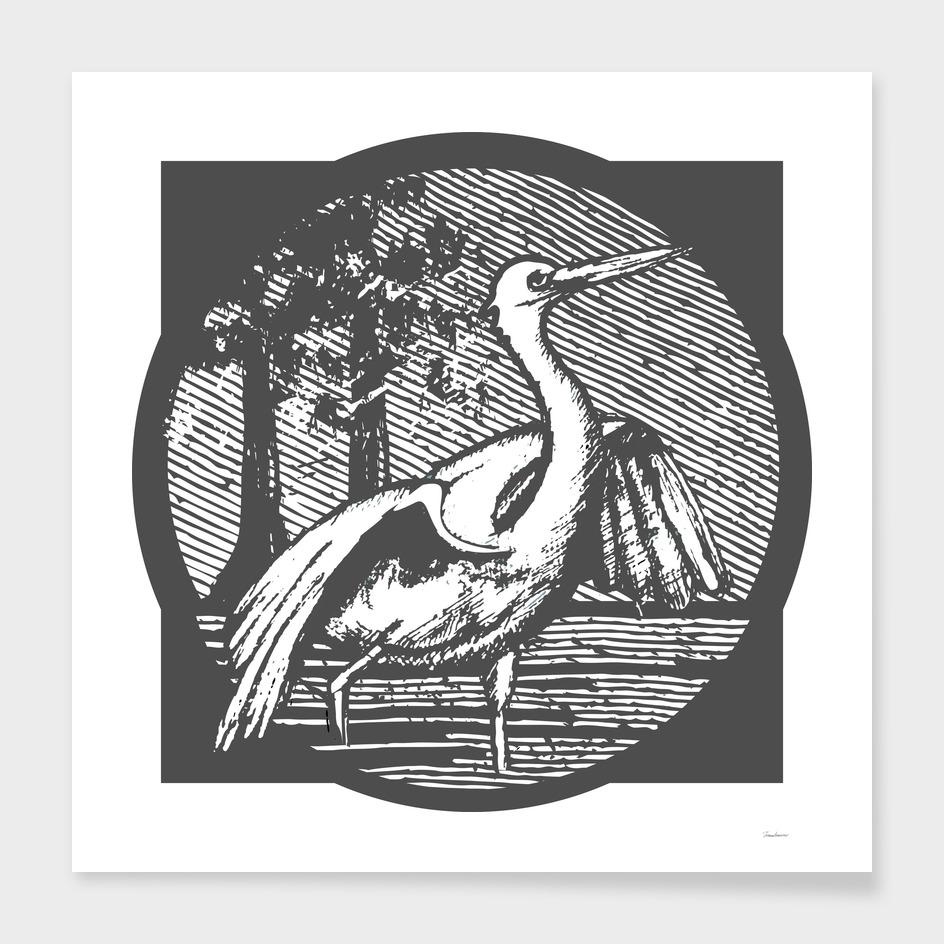 Gray Crane