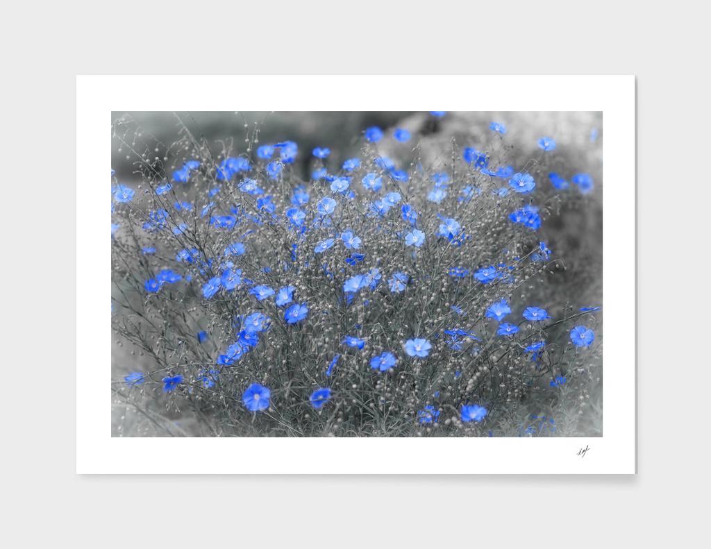 Blue Flowers Garden