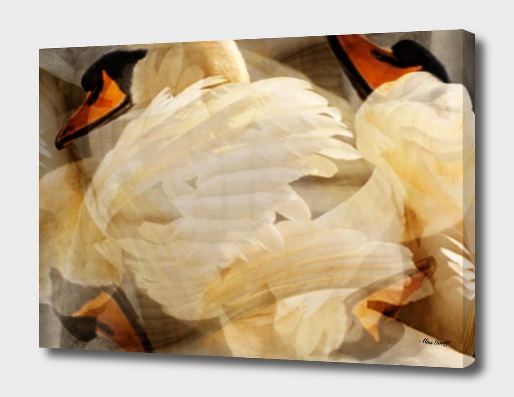 Wild Mute Swan