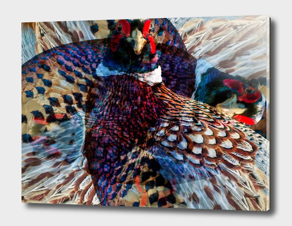 Wild Ring-Necked Pheasant