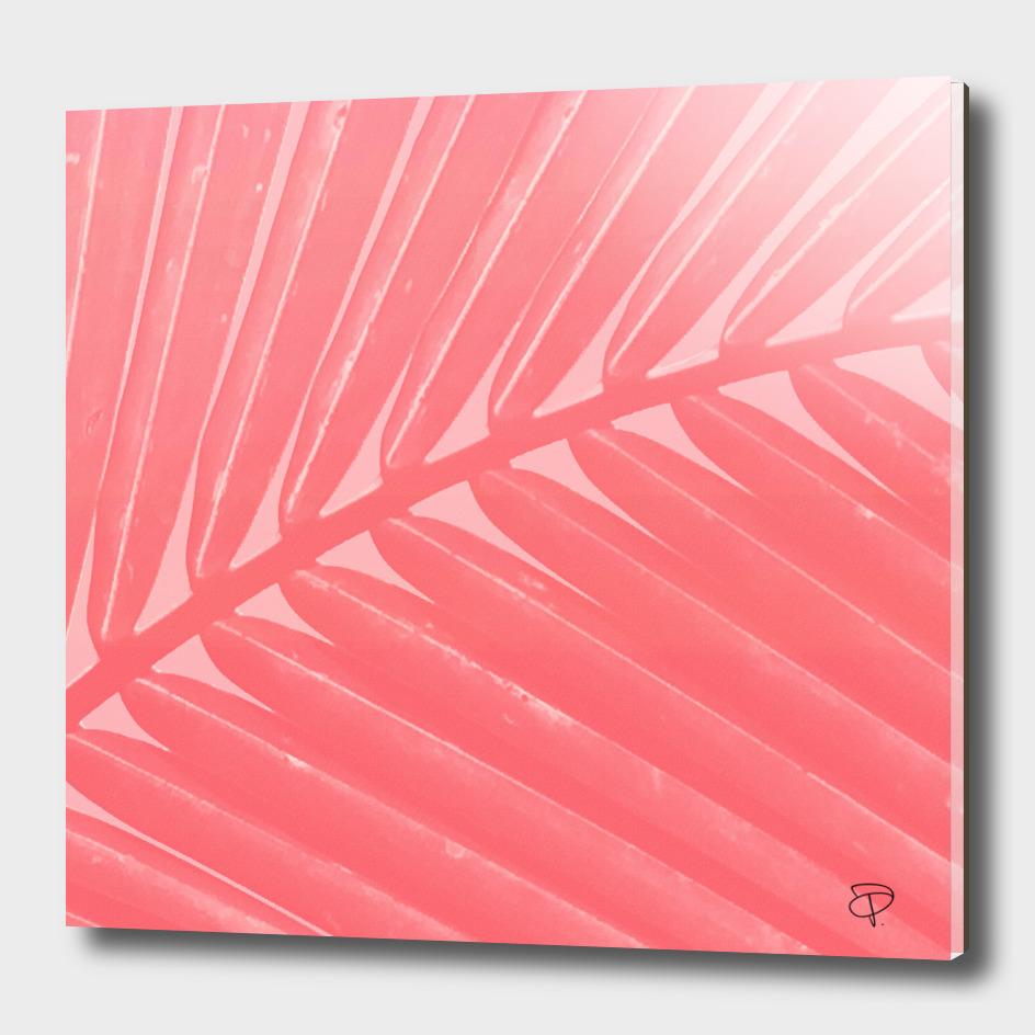 Hot Pink Palm