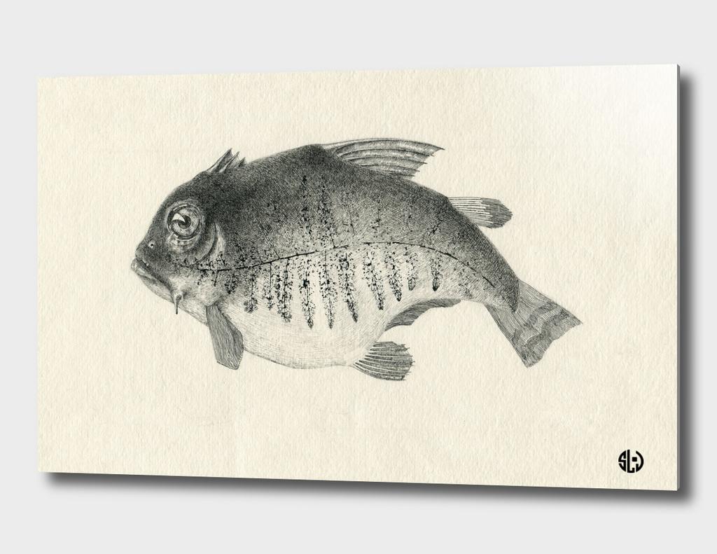 Fish Fern