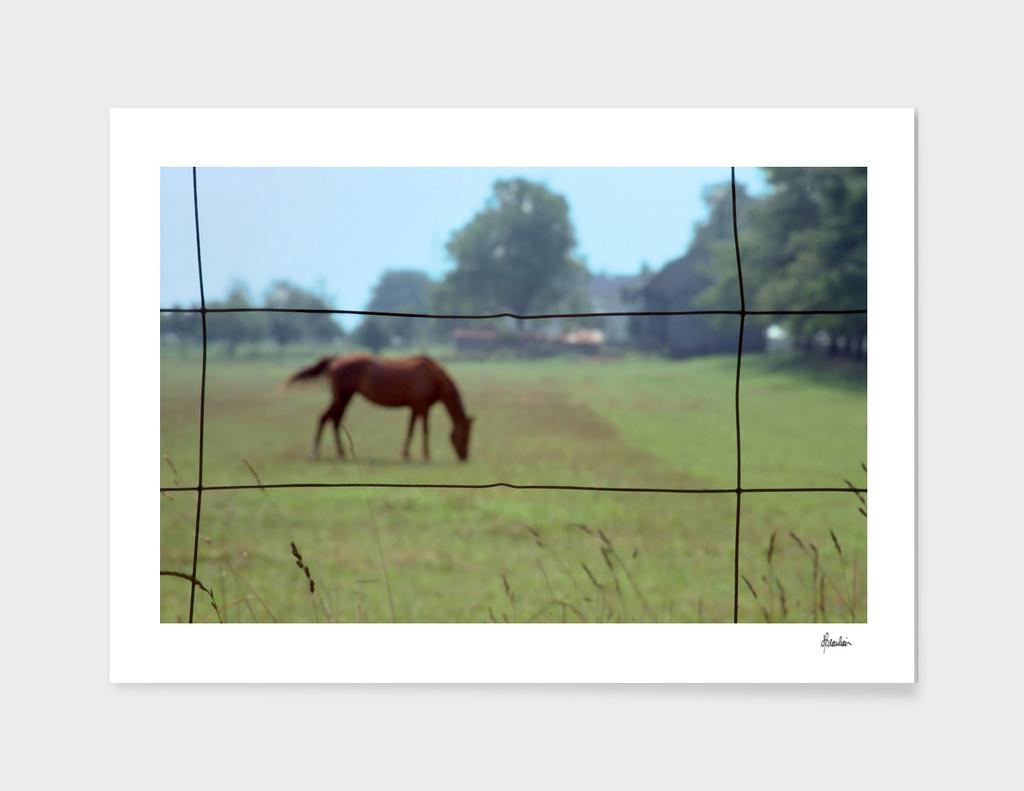 Fence shot, horse