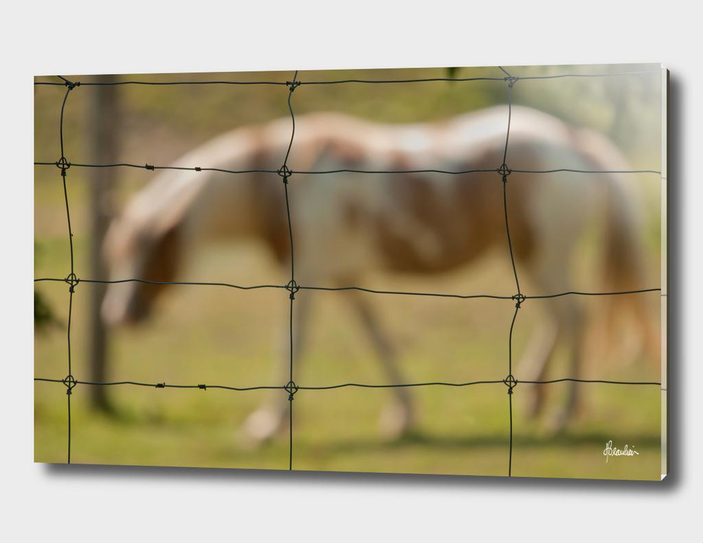 120702H Fence shot, Horse