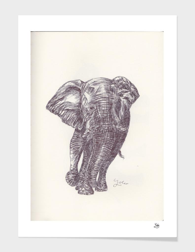 ELEPHANT 13