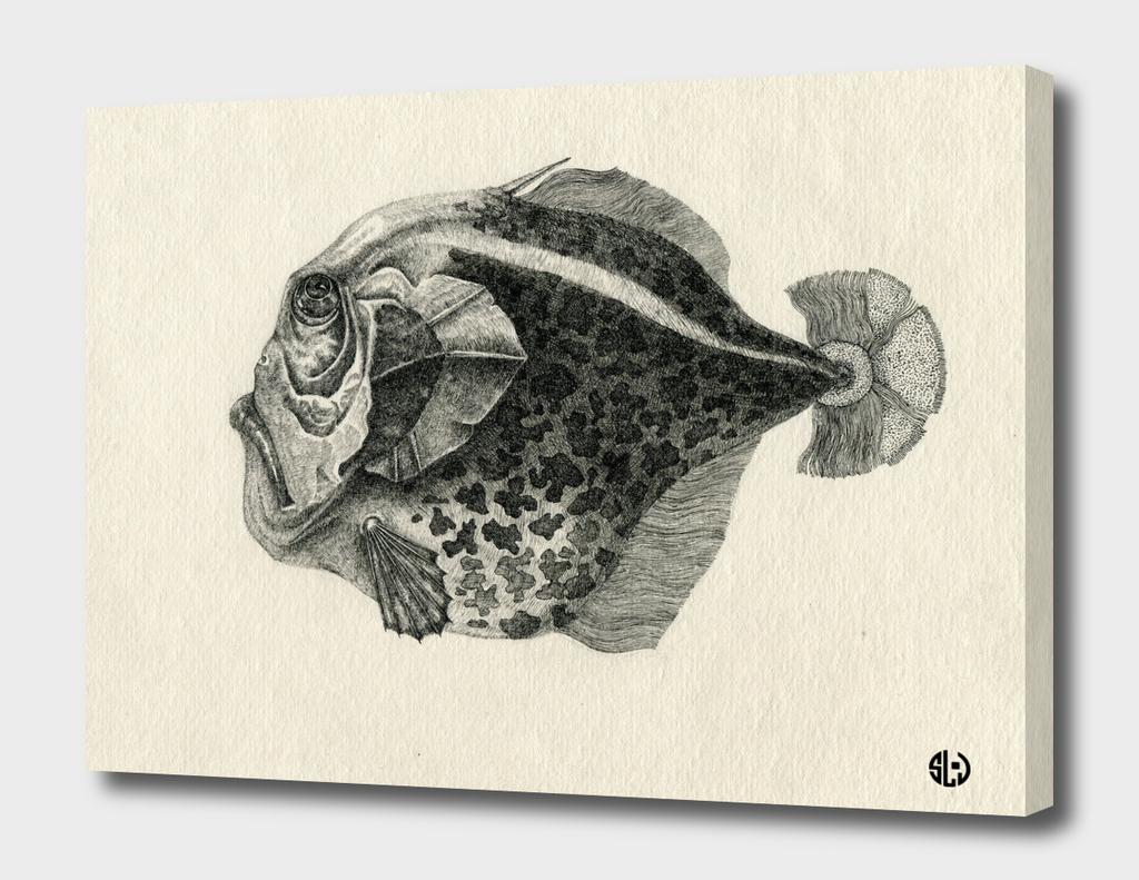 Gen. Fish