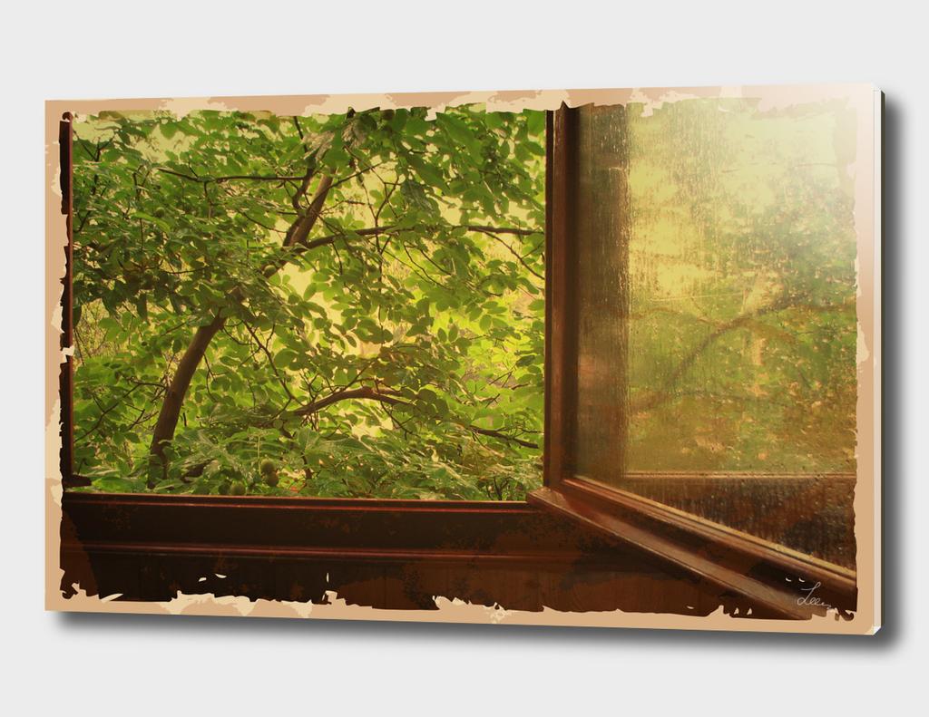 window in the rain garden