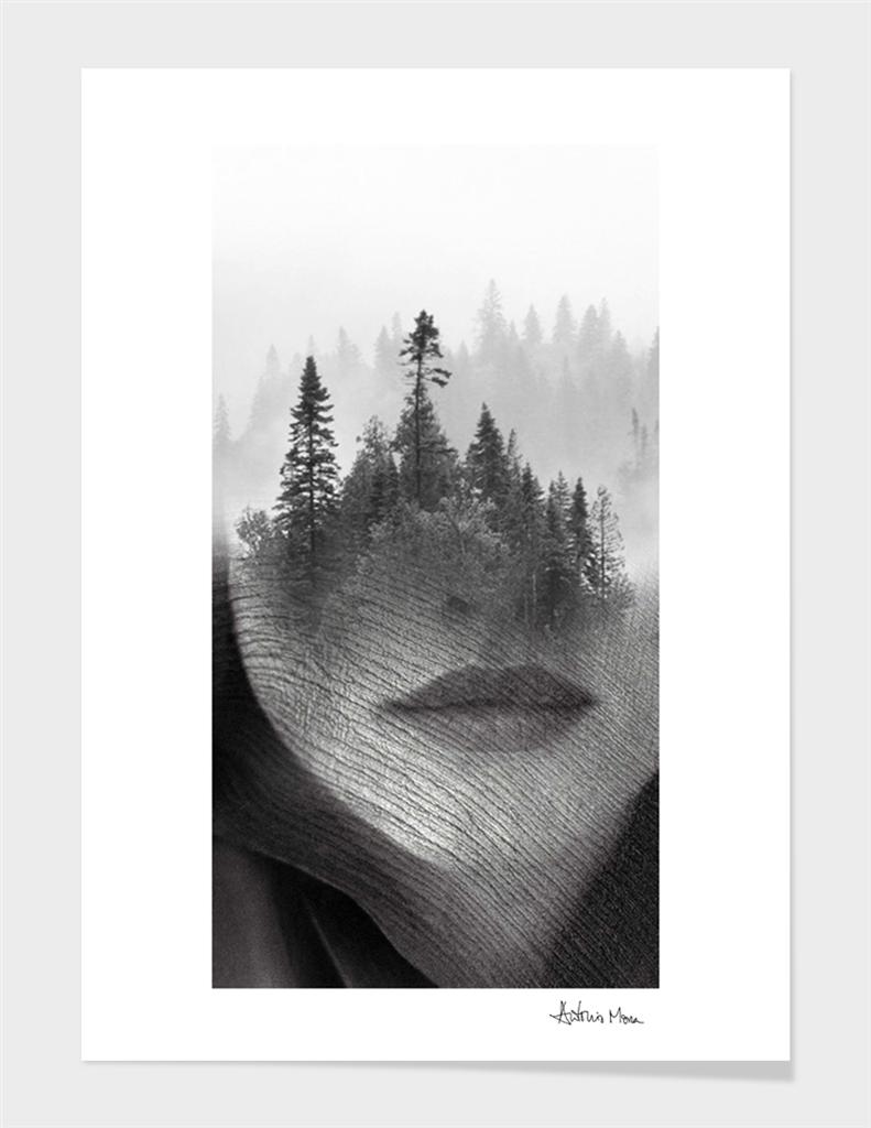 Forbidden Wood
