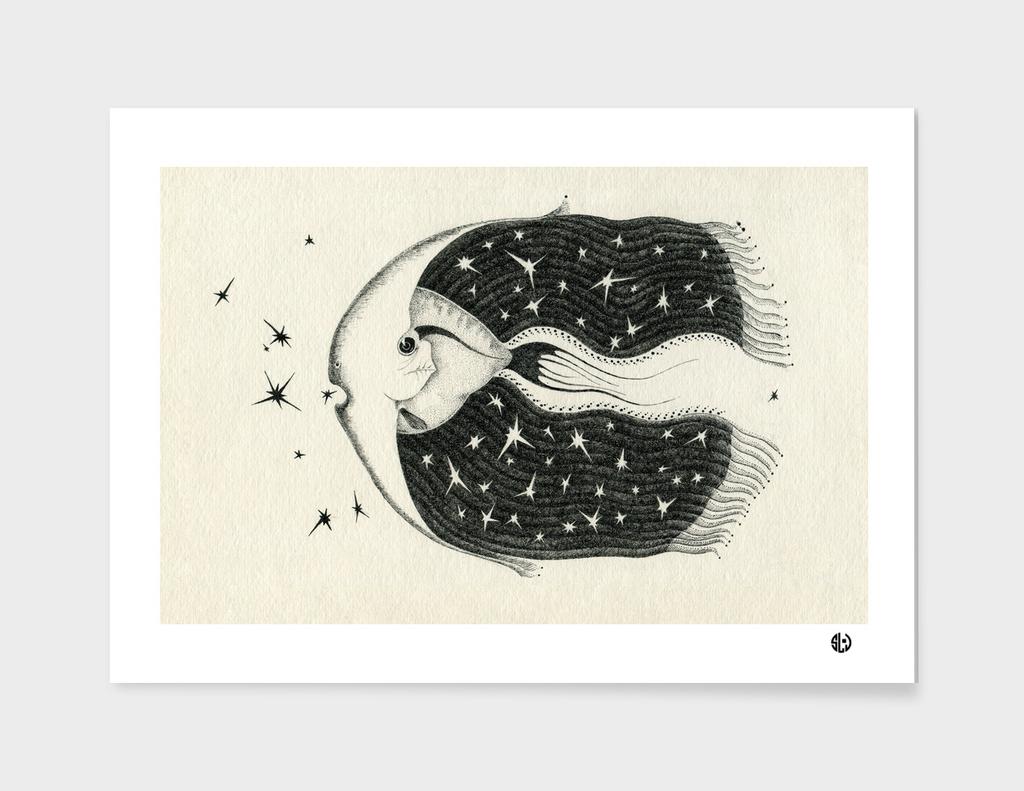 Fish eater stars