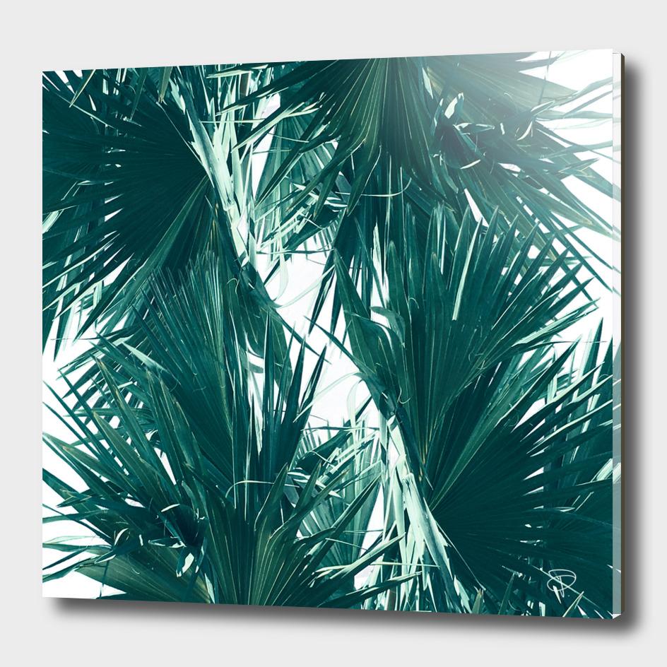 Palm Twist