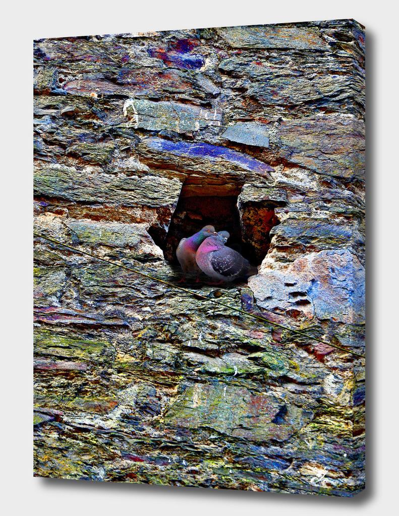 Love Birds. Concrete Jungle.