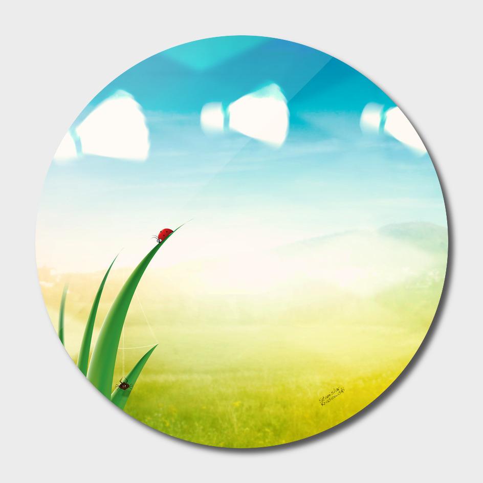 Summer landscape with grass and birdies