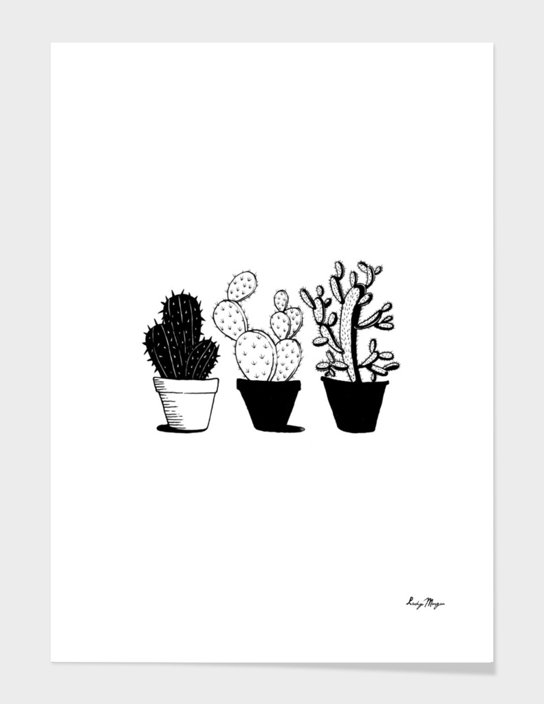 A Cactus Trio is Better Than One