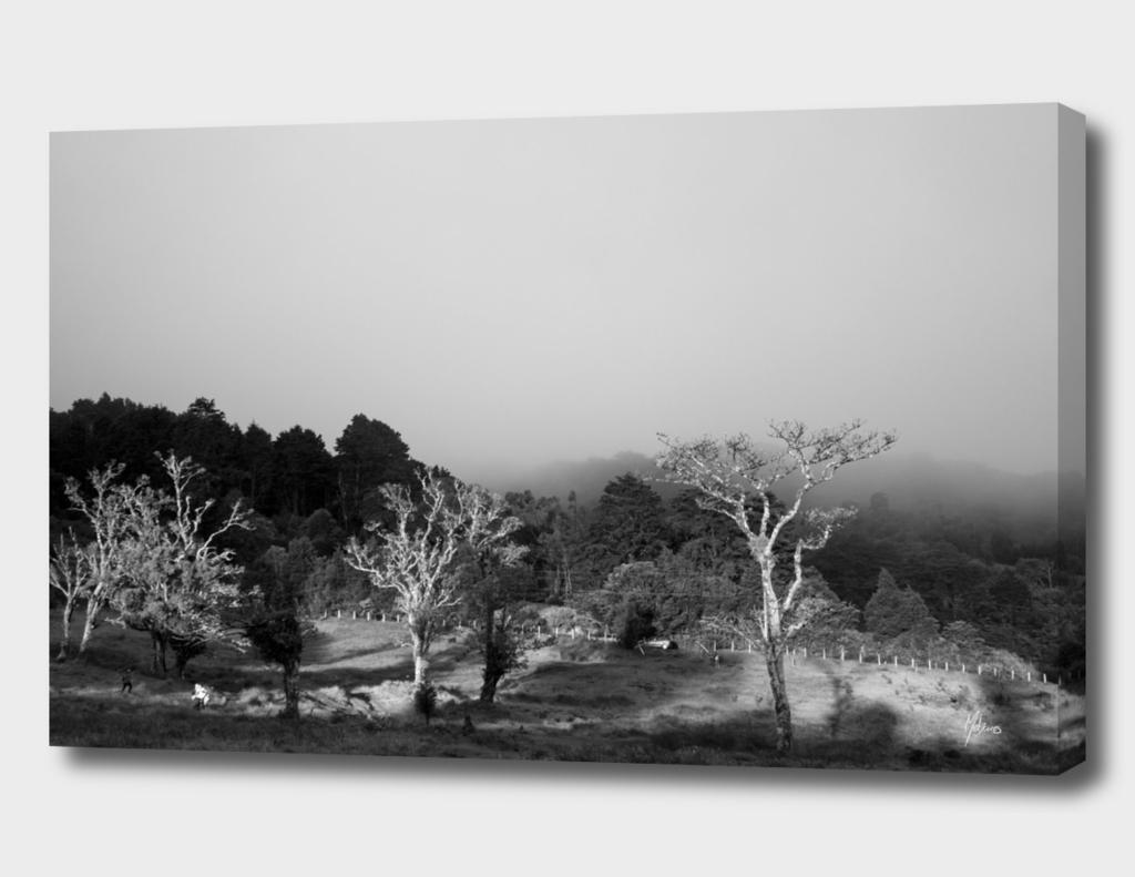 Monte de la Cruz 2