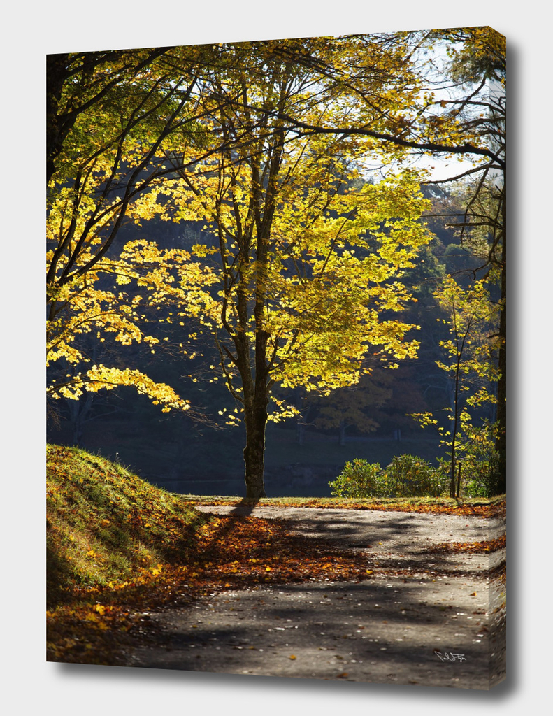 Fall colors along a serene walking trail