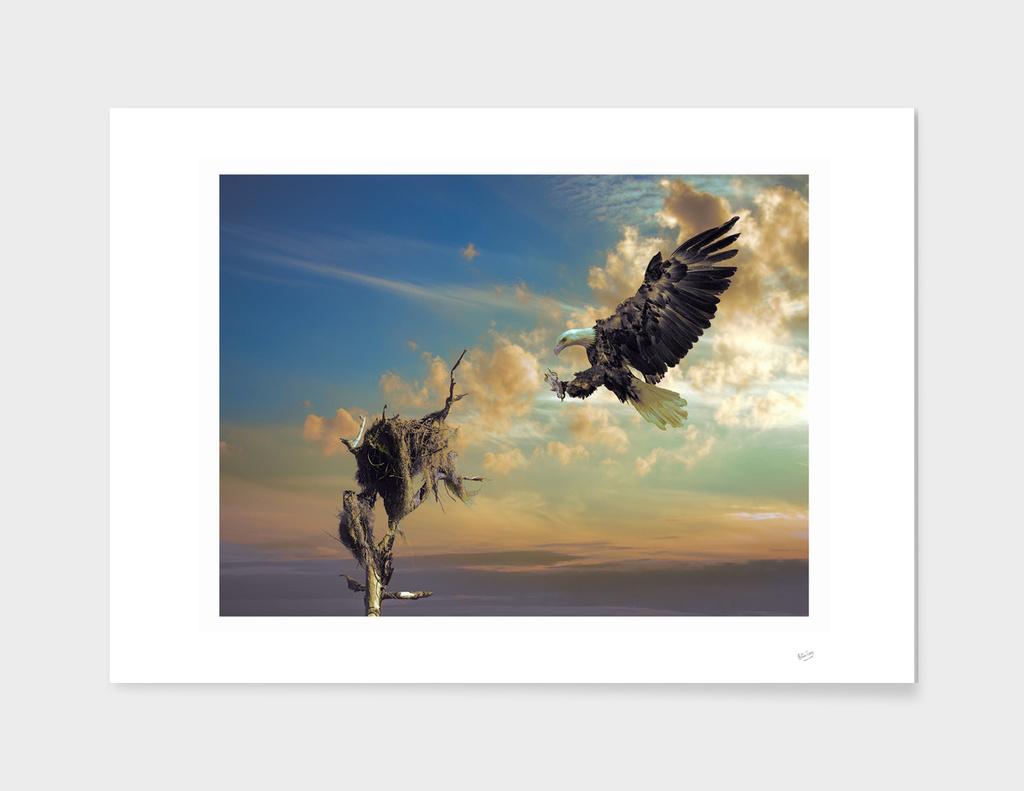 Bald Eagle Sunrise