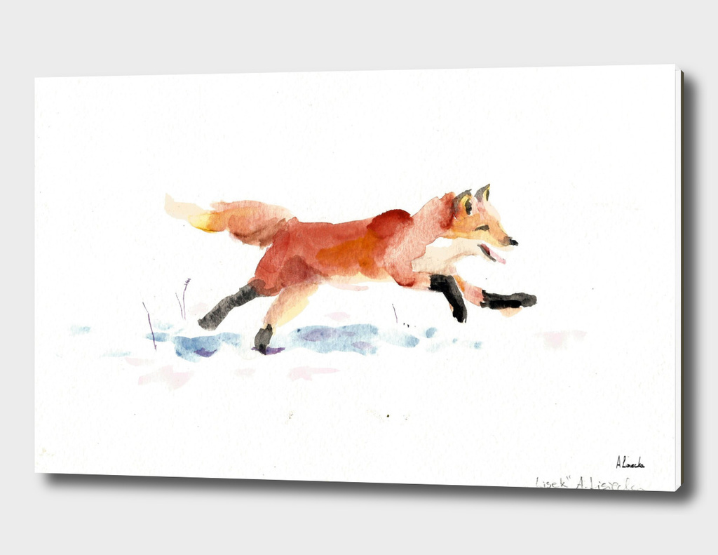 Winter red fox