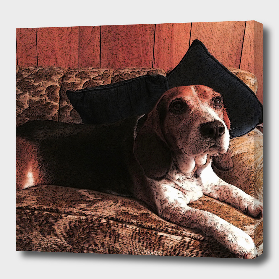Beagle on a couch.