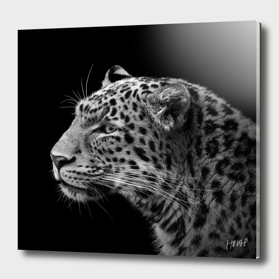 Leopard in black and white
