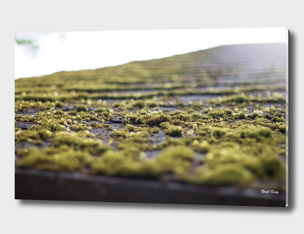 Moss Roof