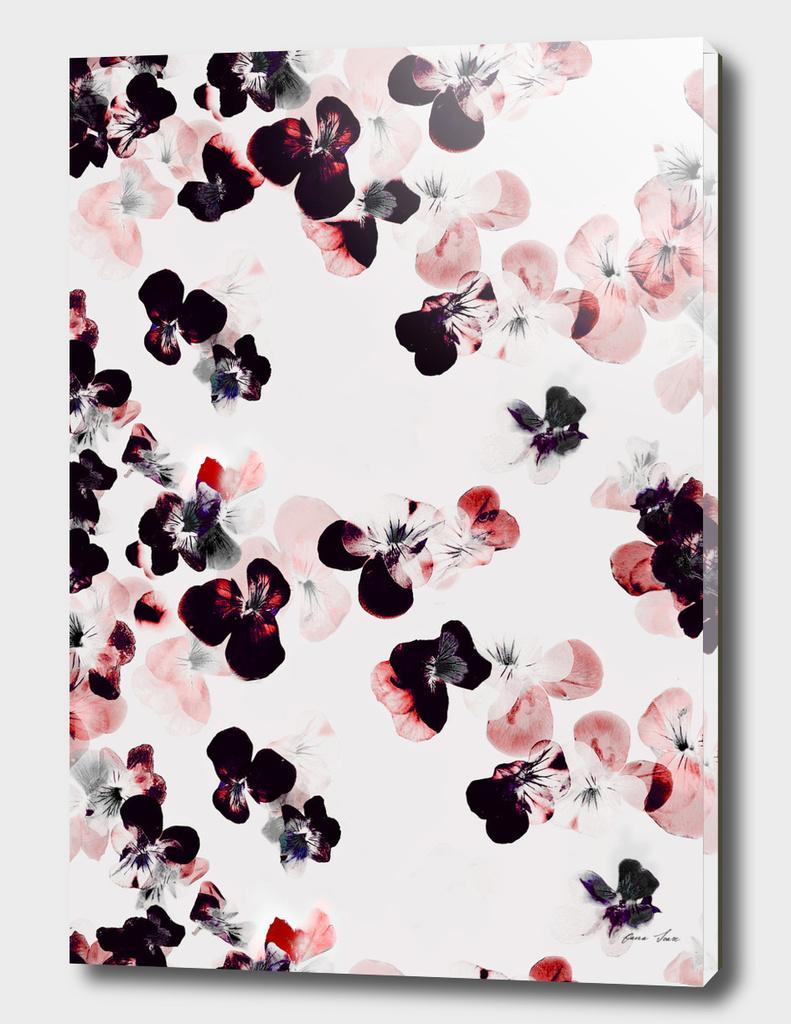 Red and black pansies petals
