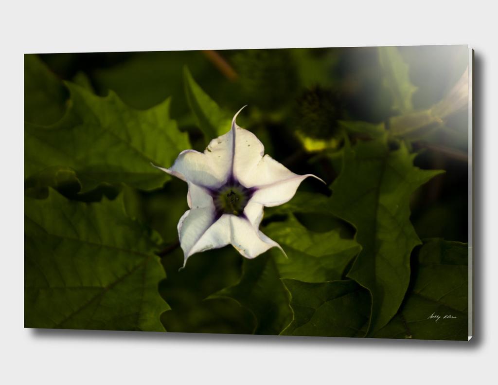 White Flower in Green