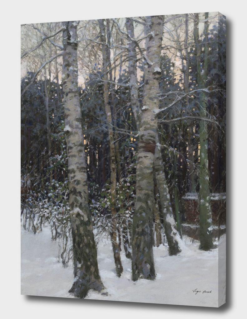 Winter Dusk.Birches.