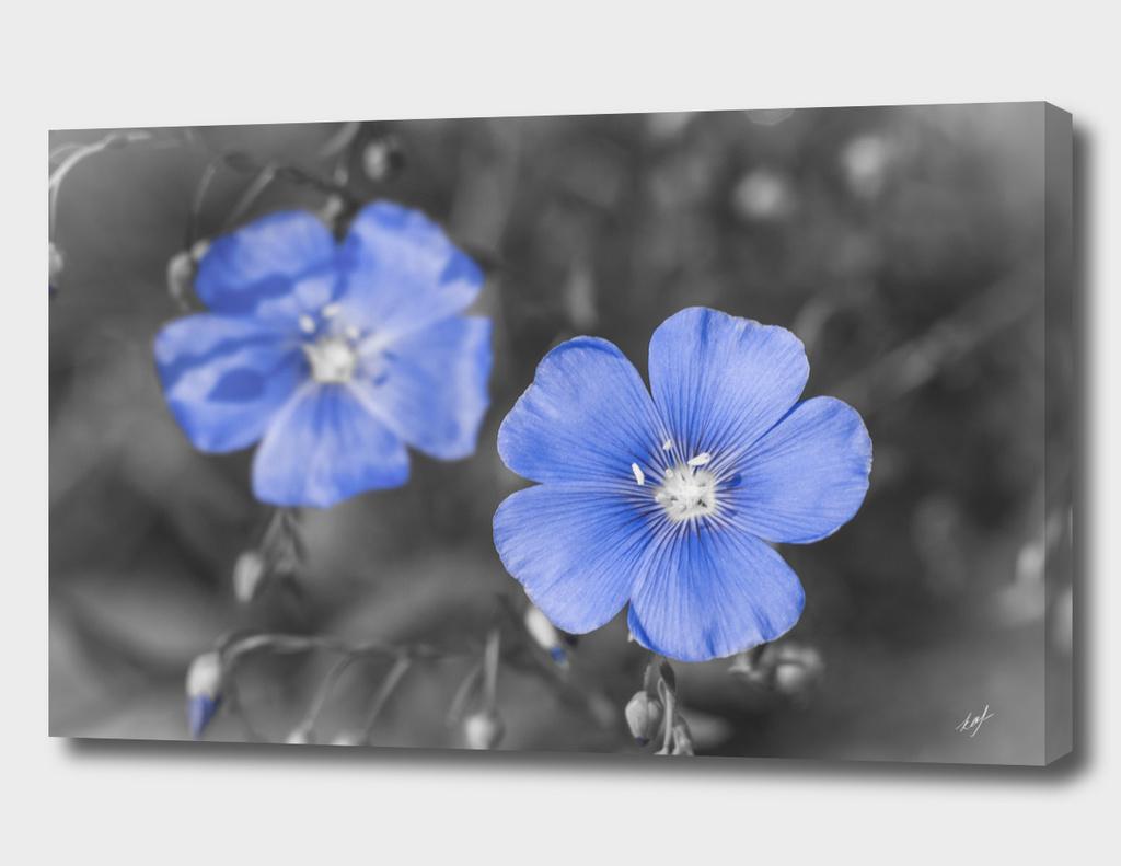 Gentle Blue Flower